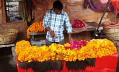 Jaipur, a esplendorosa cidade rosa