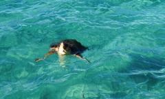 Naxos e a tartaruga das cinco