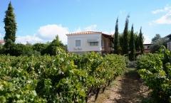 Vonícola Avantis, uma das mais prestigiadas da Grécia