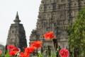Pelos templos de Bodhgaya: onde Buda se iluminou! (VÍDEO)