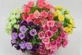 Rosas e espumante no Dia da Mulher