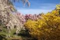 EUA : primavera em cor!