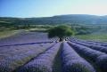 Aix-en-Provence: a província de Paul Cézanne